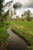 Irrigation in the Bali Rice Fields. Stock Images