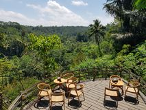 Ubud da selva imagens de stock royalty free