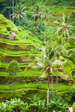 Ubud-Grün Lizenzfreies Stockfoto