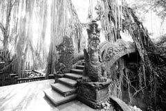 Ubud Monkey Forest Royalty Free Stock Photography