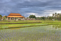 Ubud nature Stock Images