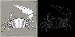 UCA fiddler crab. Handmade ink illustration vector. Nature collection Stock Image