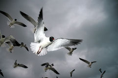 Uccelli Immagine Stock Libera da Diritti