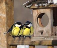Uccelli Immagine Stock