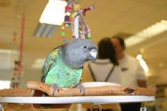 Uccelli #2 fotografie stock