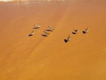 Uccelli Fotografia Stock Libera da Diritti
