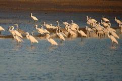 Uccelli Immagini Stock