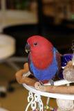 Uccelli #4 Immagine Stock