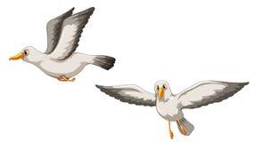 uccelli Fotografie Stock
