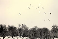 uccelli Fotografie Stock Libere da Diritti