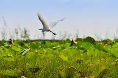 Uccelli acquatici Fotografia Stock