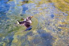 Uccelli acquatici allo zoo in acqua Fotografia Stock