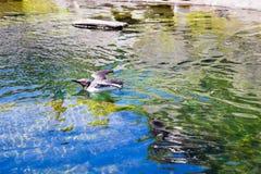 Uccelli acquatici allo zoo in acqua Fotografie Stock Libere da Diritti