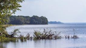 Uccelli acquatici nel bacino idrico di Minneriya, Sri Lanka Immagini Stock Libere da Diritti