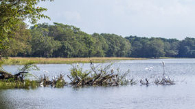 Uccelli acquatici nel bacino idrico di Minneriya, Sri Lanka Fotografia Stock