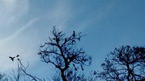 Uccelli agli alberi Fotografia Stock Libera da Diritti