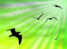 Uccelli al sole illustrazione vettoriale