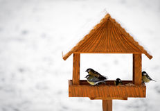 Uccelli in alimentatore Fotografia Stock Libera da Diritti
