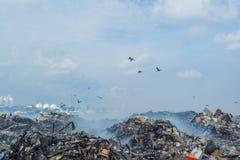 Uccelli alla discarica in pieno di fumo, della lettiera, delle bottiglie di plastica, dei rifiuti e dei rifiuti all'isola tropica immagini stock