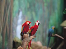 Uccelli alla natura fotografia stock