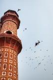 Uccelli alla tomba del ` s di Safdarjung - Nuova Delhi, India fotografie stock libere da diritti