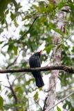 Uccelli in Amazon Immagini Stock Libere da Diritti