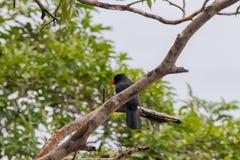 Uccelli in Amazon Fotografie Stock Libere da Diritti
