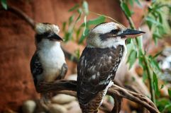 Uccelli appollaiati sul ramo fotografia stock