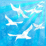 Uccelli bianchi che nuotano nell'oceano Immagini Stock Libere da Diritti