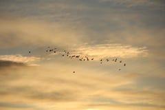 Uccelli   Campagna Fotografia Stock Libera da Diritti