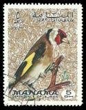 Uccelli, cardellino europeo illustrazione vettoriale