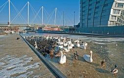Uccelli che aspettano alimento nell'inverno Immagini Stock Libere da Diritti