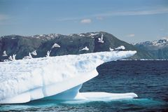 Uccelli che atterrano sull'iceberg immagine stock