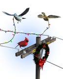 Uccelli che decorano per il natale - con il percorso di residuo della potatura meccanica Fotografia Stock Libera da Diritti