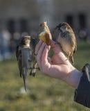 Uccelli che mangiano dalla mano del bambino Immagini Stock Libere da Diritti