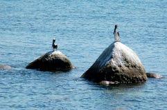 Uccelli che mettono sulle rocce, vicino ad Acapulco, il Messico Fotografia Stock