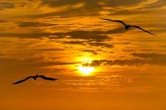 Uccelli che pilotano siluetta Fotografie Stock
