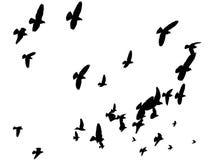 Uccelli che pilotano via - pace al mondo Immagini Stock Libere da Diritti