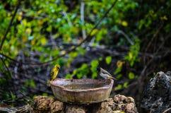 Uccelli che prendono un bagno Fotografia Stock Libera da Diritti