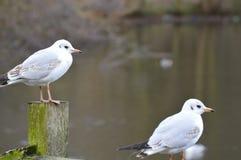 Uccelli che raffreddano sulla sponda del fiume immagine stock