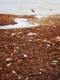 Uccelli che selezionano attraverso i rifiuti Immagine Stock
