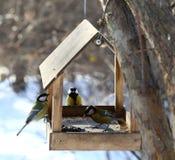 Uccelli che si alimentano in inverno Immagini Stock