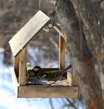 Uccelli che si alimentano in inverno Fotografia Stock