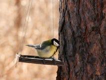 Uccelli che si alimentano in inverno Immagini Stock Libere da Diritti