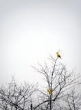 Uccelli che si appollaiano in foschia dell'albero di autunno Fotografie Stock