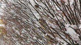 Uccelli che si nascondono nelle cime d'albero stock footage