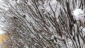 Uccelli che si nascondono nelle cime d'albero video d archivio