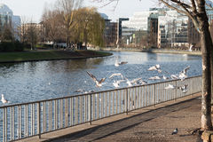 Uccelli che si siedono su un recinto e che volano dal fiume Fotografia Stock