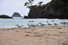 Uccelli che si siedono sulla spiaggia Fotografia Stock