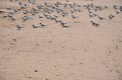 Uccelli che si siedono sulla spiaggia Fotografie Stock Libere da Diritti